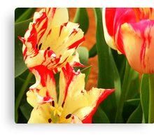 tulips striped Canvas Print