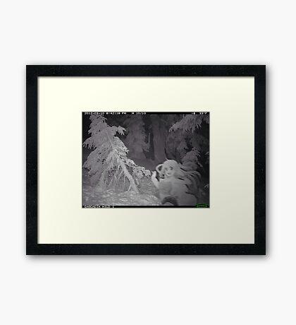 Something caught on camera Framed Print