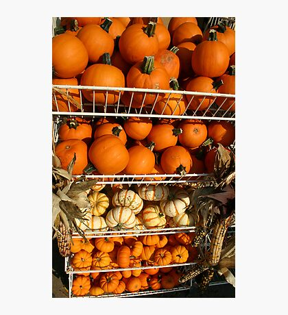 Pumps and Gourds  Photographic Print