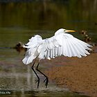 Birds Of The Coffs Coast by Normf