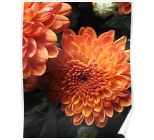 Autumn in Bloom Poster