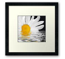 Daisy Dawning Framed Print