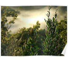 """""""Banksia & Fog"""" Poster"""