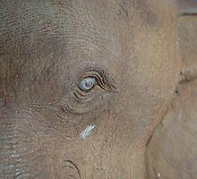 Teak Elephant by kittbagg