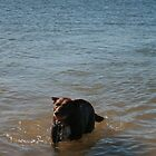 3 Nick's Rescue Dog Kelpie-Border Collie by Cathie Brooker