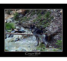 CANYON WOLF Photographic Print