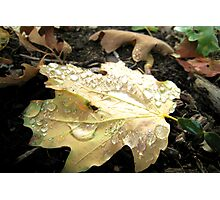 Morning Dew in Autumn Photographic Print
