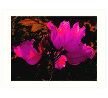 Wilting Hibiscus Art Print