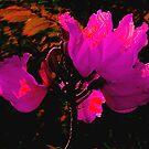 Wilting Hibiscus by Rosalie Scanlon