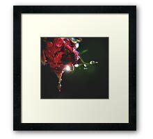 Dark Rose Framed Print