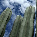 Cactus And Clouds by tomryan