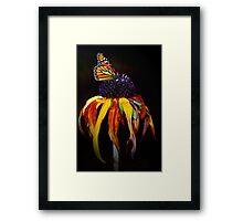 Autumn Monarch Framed Print