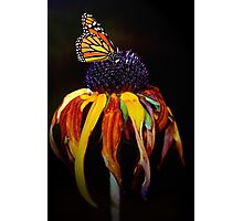 Autumn Monarch Photographic Print
