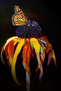 Autumn Monarch by Renee Dawson