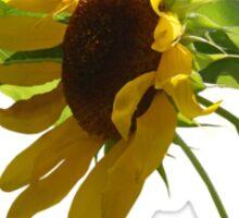 Backlit Sunflower Sticker