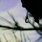 Slow Drip by Craig Forhan