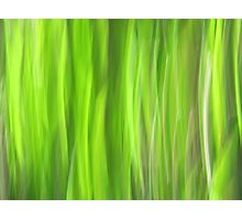 Grass - Light Photographic Print