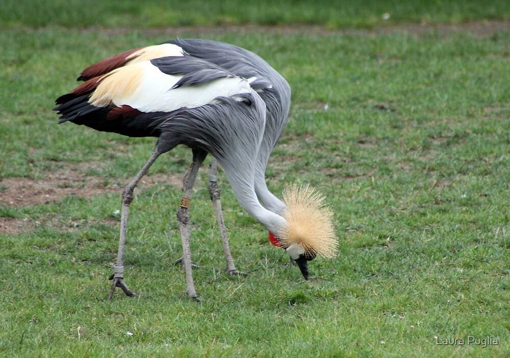 African Cranes, Two In One by Laura Puglia