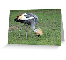 African Cranes, Two In One Greeting Card
