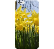 Daffodils 2 by Amber Feng Shui Art iPhone Case/Skin