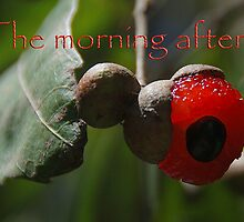 The morning after... by George Petrovsky