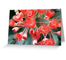 flowering gum Greeting Card