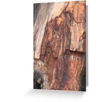 Petrified Wood Greeting Card