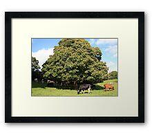 County Clare farm scene 2 Framed Print