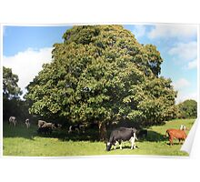 County Clare farm scene 2 Poster
