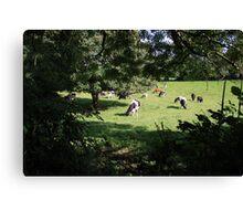 County Clare farm scene 3 Canvas Print