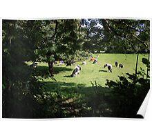 County Clare farm scene 3 Poster