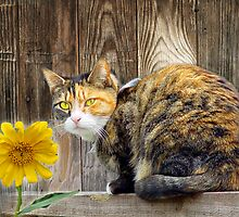 Pretty Tortie by digitalmidge