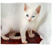 my kitten Poster