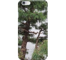 Bonsai Close Up iPhone Case/Skin