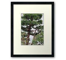 Bonsai Close Up Framed Print
