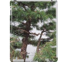 Bonsai Close Up iPad Case/Skin