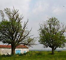 In Between the Trees by Pamela Jayne Smith