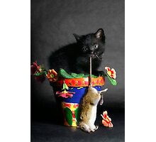 Rat Cat Photographic Print