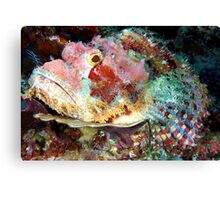 Smallscale Scorpionfish Canvas Print