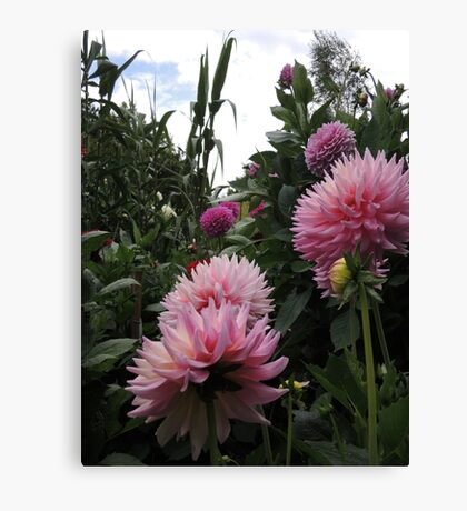 Perfume Of Pinks Canvas Print