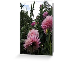 Perfume Of Pinks Greeting Card