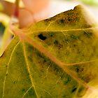 4 o'clock leaf by beebite