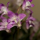 Orchids by Rosemaree