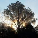 Sunburst Morning by photoally