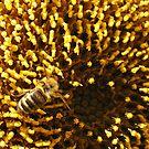 bee on a sunflower by Tamara Brandy