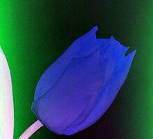 Blue tulip - UK456/22p - www.lizgarnett.com by Liz Garnett