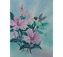HUMMINGBIRD ORIGINAL OIL Photographic Print