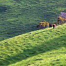 Green Pastures 2** by helmutk