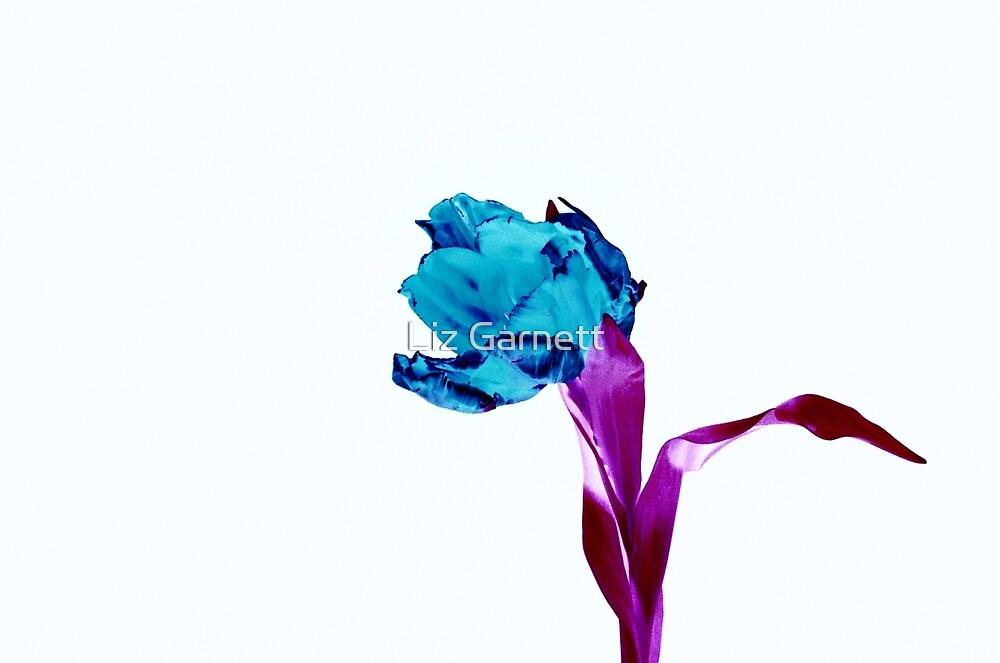 Blue Tulip - UK598/17p - www.lizgarnett.com by Liz Garnett