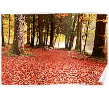 forest leaf floor Poster